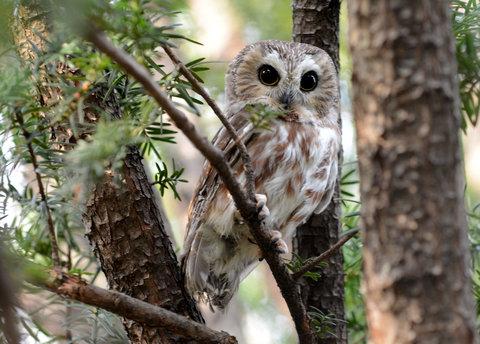 12cityroom-owl2-blog480